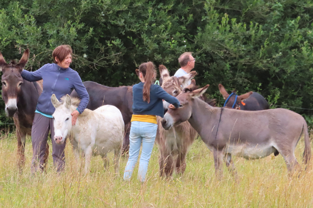 F'Ezelen, ezels verzorgen en knuffelen