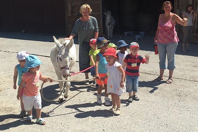 De ezel, vriend van groot en klein. Ook voor groepen.