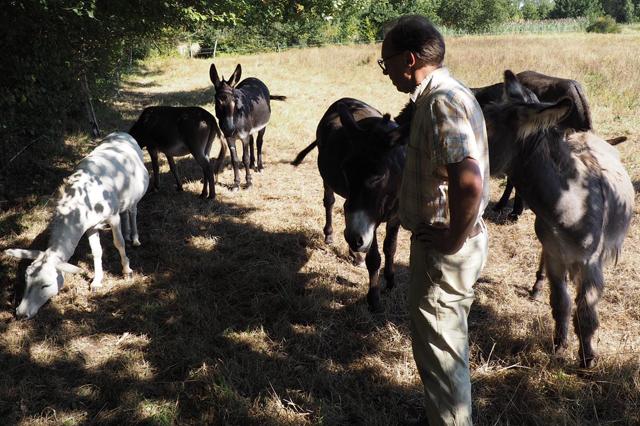 Joris met de kudde ezels