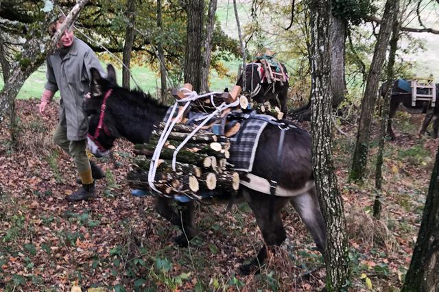 Ezelskracht, bosbouw