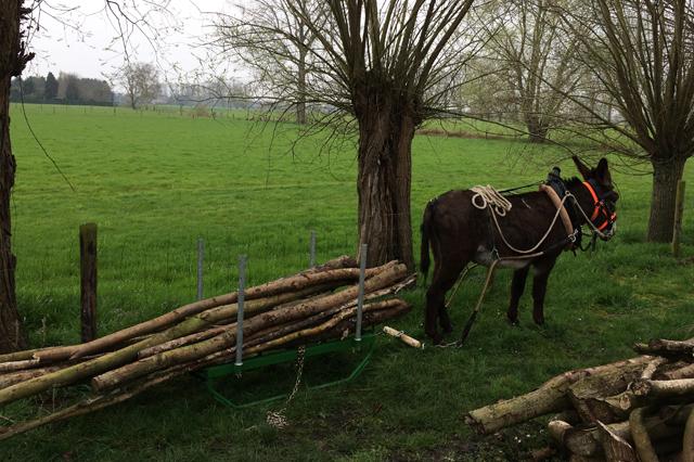 De ezel aan het werk, bosbouw