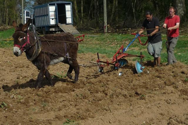 Ezelskracht, landbouw